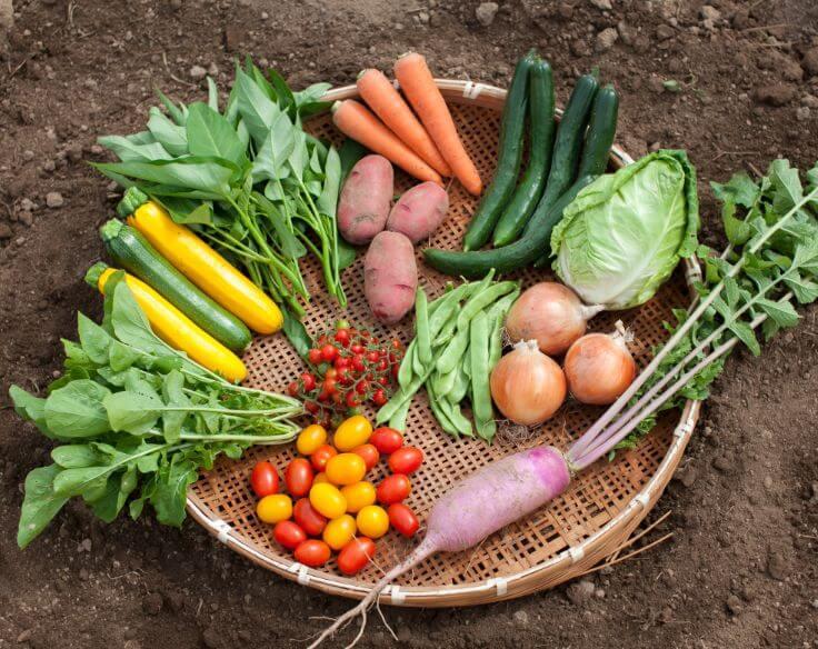 むすび野菜セット